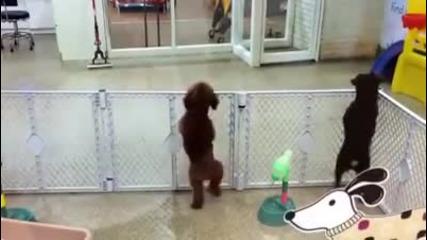 Развълнувано кученце в очакване на стопанина си