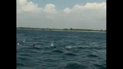 Изучаване на китовата акула