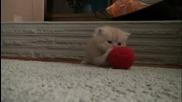 Сладко котенце..