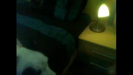 Джак ръсел светва сам лампата.