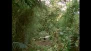 Лироопашата птица - имитатор на звуци
