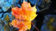 Pachelbel Canon in D major- Elegance - version Autumn Leaves