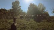 Качак и овца