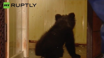 Barney the Bear Cub is Looking for a New Home