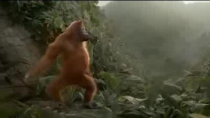 Смешно танцуваща маймуна