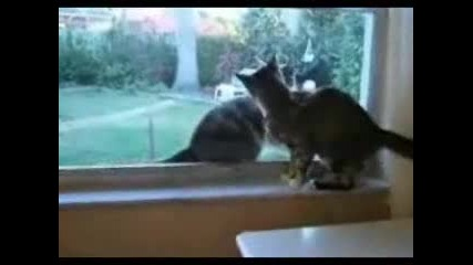 The Two Fighting Cats.flv