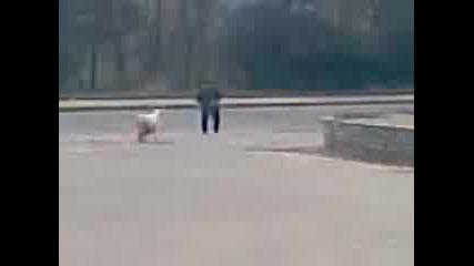 Umnata koza