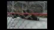 Jeff Hardy Tribute Video - Pain