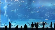 Kuroshio Sea - Големия аквариум