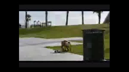 Куче Скейтбордист!