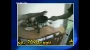 Господари На Ефира.22.02.2008 - Na Roqci.com (High-Quality)