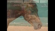 Bob's Hickory Rio - Cutting Horse