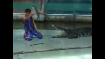 Инцидент С Крокодил