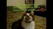 Компилация - Говорещи Котки
