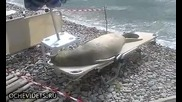 Хитър морски лъв си прави плаж на шезлонг