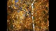 Hd Colorful Fall Leaves in Lockett Meadow.