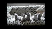 Сладки танцуващи котенца