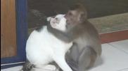 """Маймуна си е хванала """"мацка""""! То не бе любов, не бяха целувки… чудо!"""