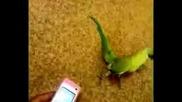 Танцуващата птица