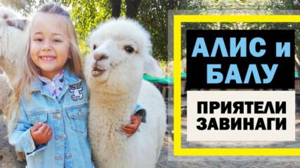 Необикновеното приятелство на малката Алис и алпаката Балу