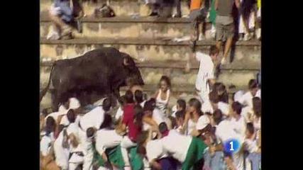 Бик скача в публиката и ранява близо 30 души!