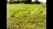 Minuscule Caterpillars Dream