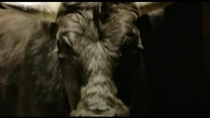 Галена 2012 - Спри ме (official Video) - Galena - me