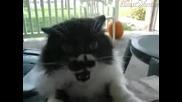 Побъркана котка се кара на човек
