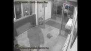napadenie ot pitbull