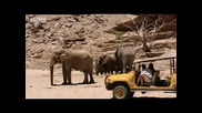 Namibian elephant memory - extreme animals - Bbc wildlife