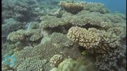 8 юни - Международен ден на океана