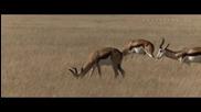 Съхрани! Земята е Красива: Намибийска Пустиня - Save! Beautiful Earth: Namibian Desert