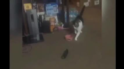 Котки и опасни краставици