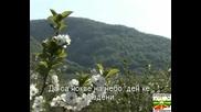 Македонско Девойче - Караоке