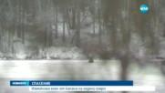 Спасиха елен, паднал в ледено езеро
