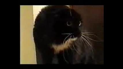 Говореща котка (рофл)