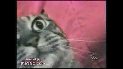 Пееща котка