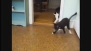 Котки на наркотици