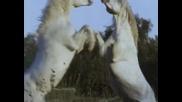 Очевидец: Конят * Бг Аудио * (1997) Eyewitness : Horse