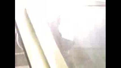 Куче Във Варбург