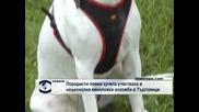 Породисти ловни кучета участваха в национална киноложка изложба в Търговище