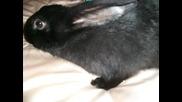Моите зайчета