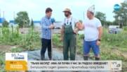 Ентусиасти садят домати и краставици пред блока