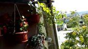Първото плацикане на Велиславчо за това лято в басейна на терасата :)