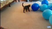 Компилация! Котки срещу балони