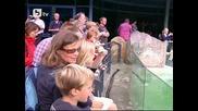 Берлинският зоопарк показа новородени тюленчета