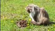 Котка показва на къртицата , кой е шефа !