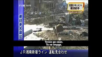 Куче се грижи за ранено куче от заметресението в Япония