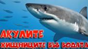 Акулите, най-опасните хищници във водата!