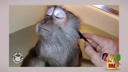 Чистотата е мерило за културата на човека... и животните! Тази компилация го доказва! :D